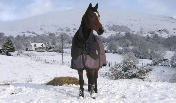 Photo of a horse in the snow.